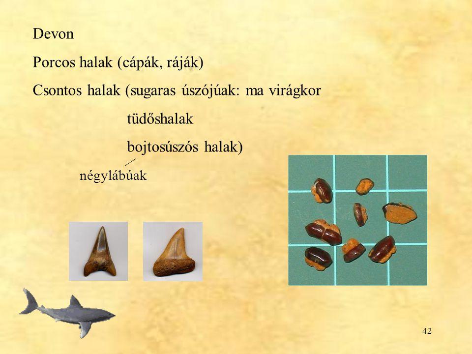 Devon Porcos halak (cápák, ráják) Csontos halak (sugaras úszójúak: ma virágkor. tüdőshalak. bojtosúszós halak)