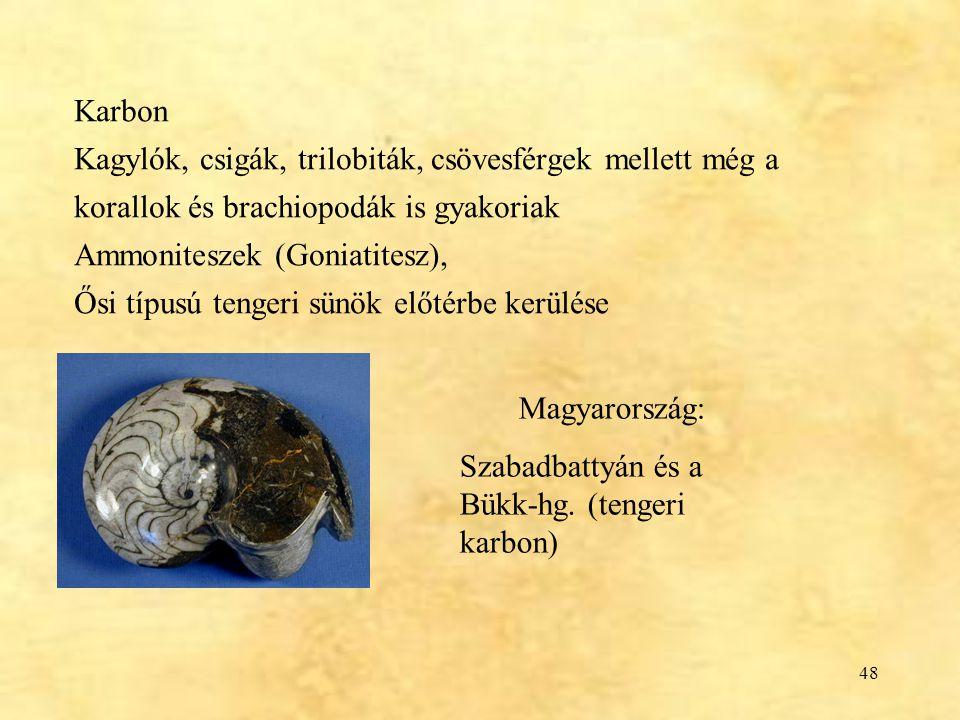Karbon Kagylók, csigák, trilobiták, csövesférgek mellett még a korallok és brachiopodák is gyakoriak.