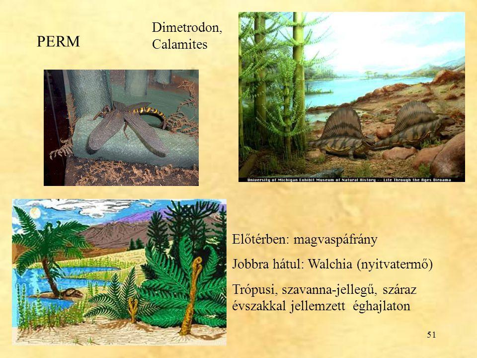 PERM Dimetrodon, Calamites Előtérben: magvaspáfrány