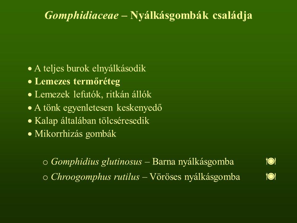 Gomphidiaceae – Nyálkásgombák családja