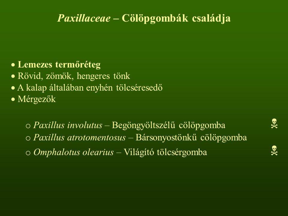Paxillaceae – Cölöpgombák családja