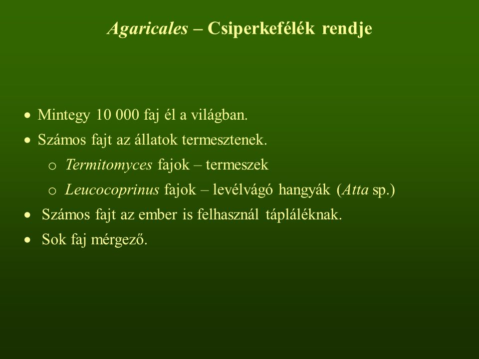 Agaricales – Csiperkefélék rendje