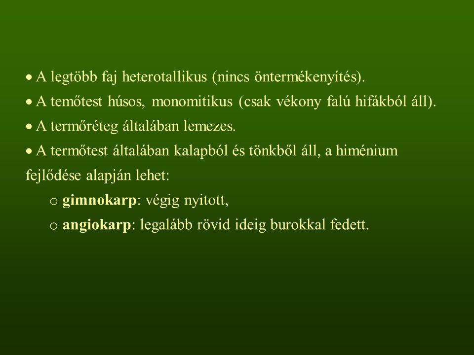 A legtöbb faj heterotallikus (nincs öntermékenyítés).