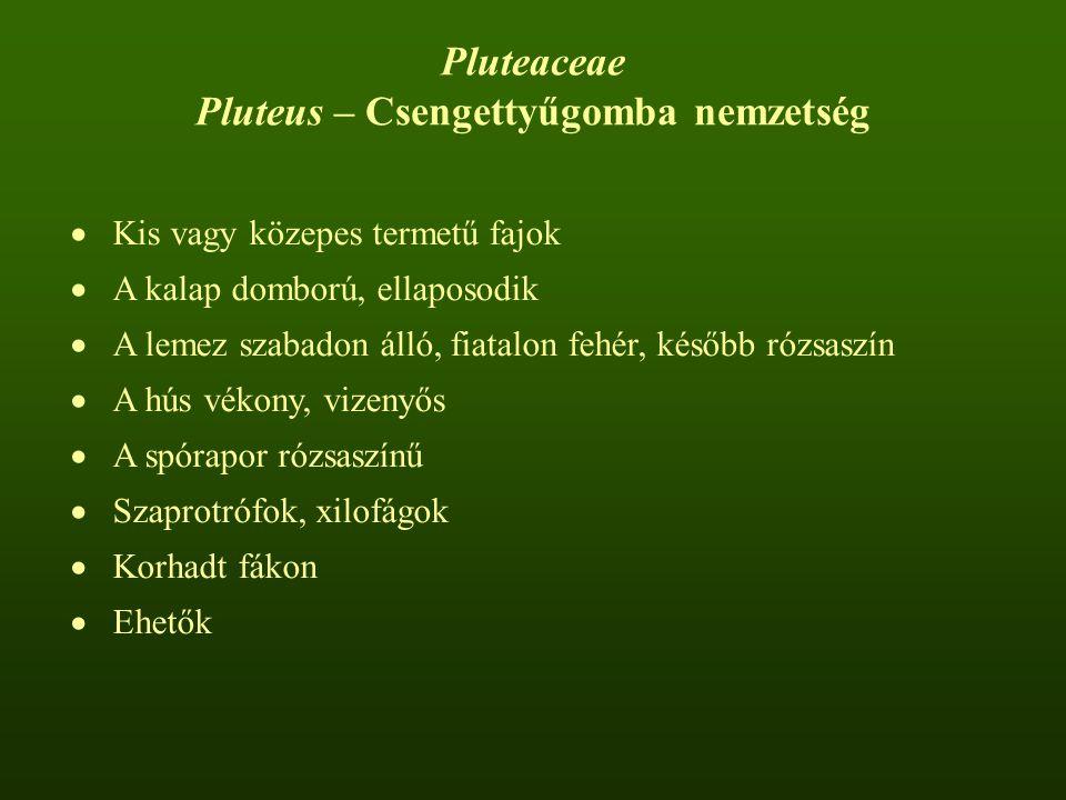Pluteus – Csengettyűgomba nemzetség