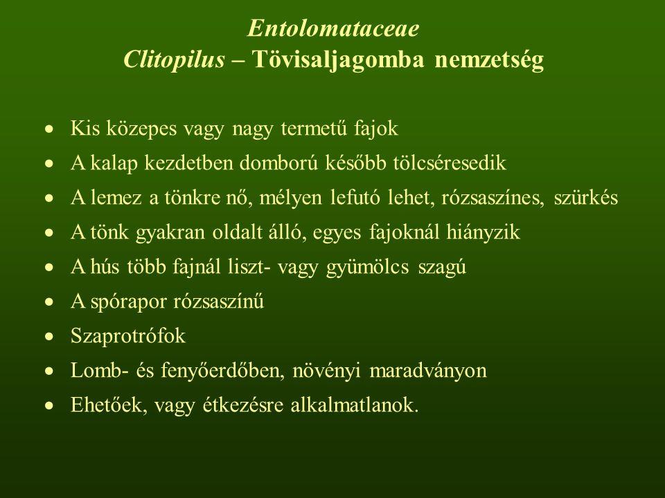 Clitopilus – Tövisaljagomba nemzetség