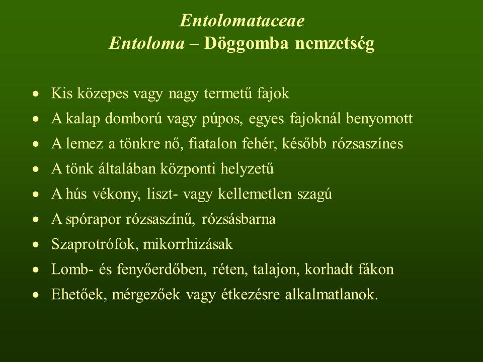 Entoloma – Döggomba nemzetség