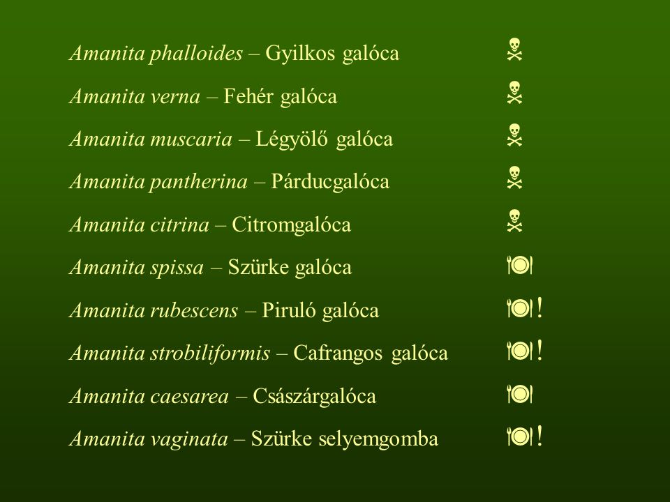 Amanita phalloides – Gyilkos galóca 