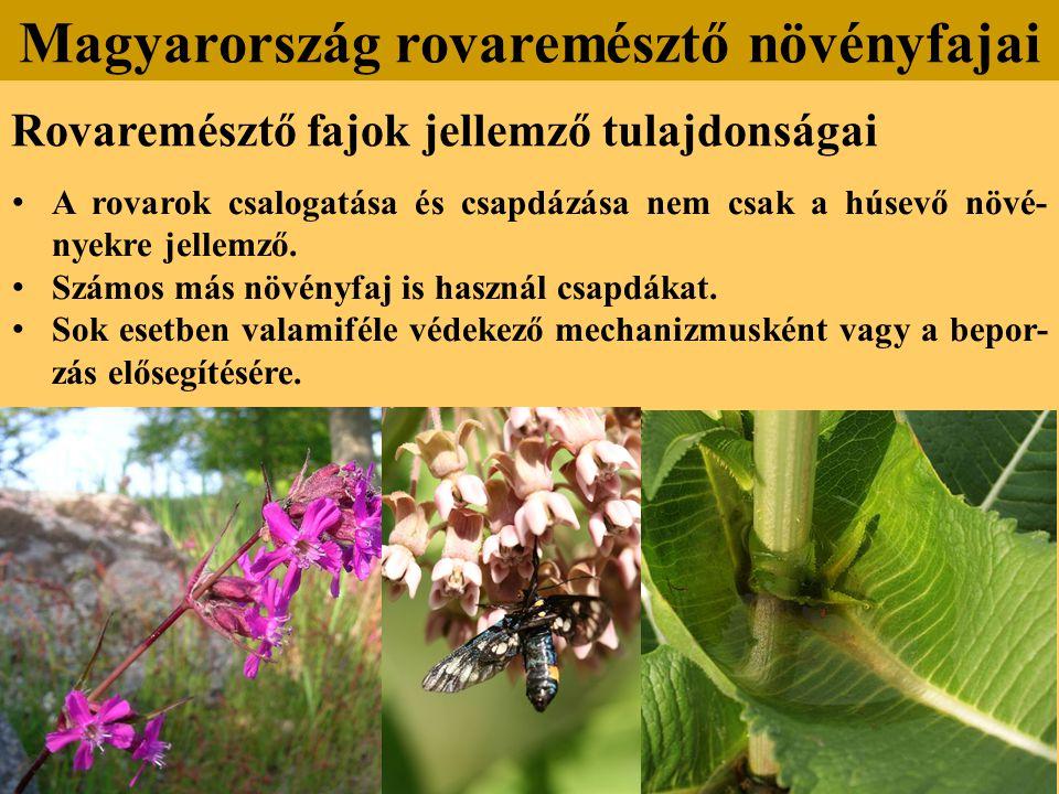 Magyarország rovaremésztő növényfajai
