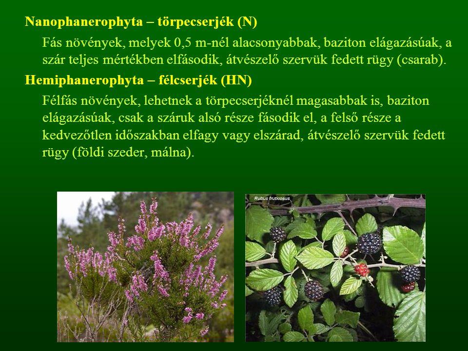 Nanophanerophyta – törpecserjék (N)
