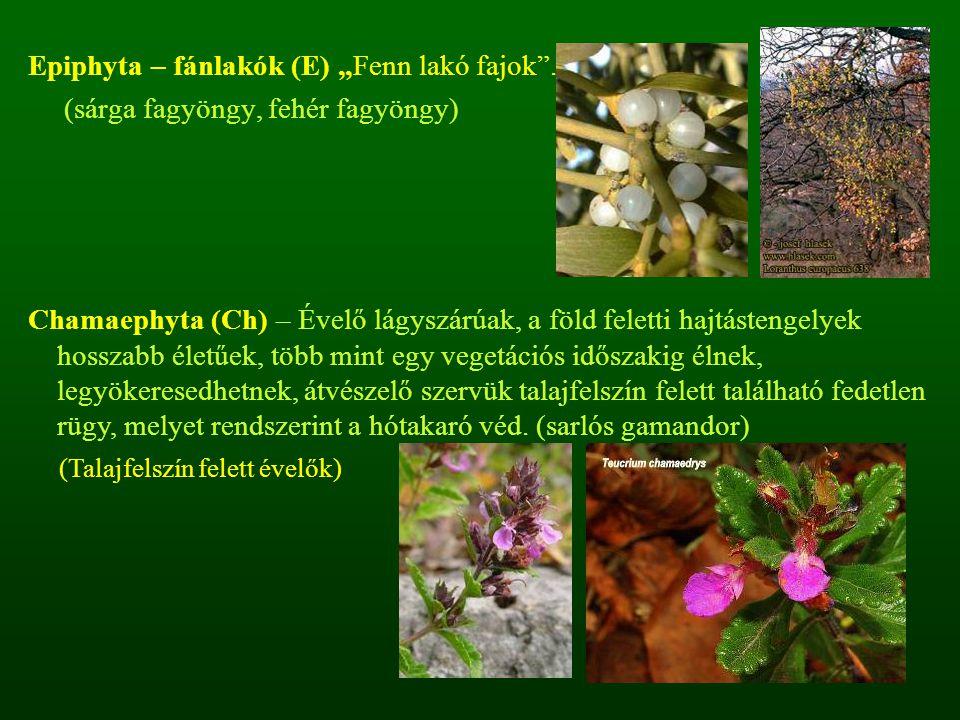 """Epiphyta – fánlakók (E) """"Fenn lakó fajok ."""