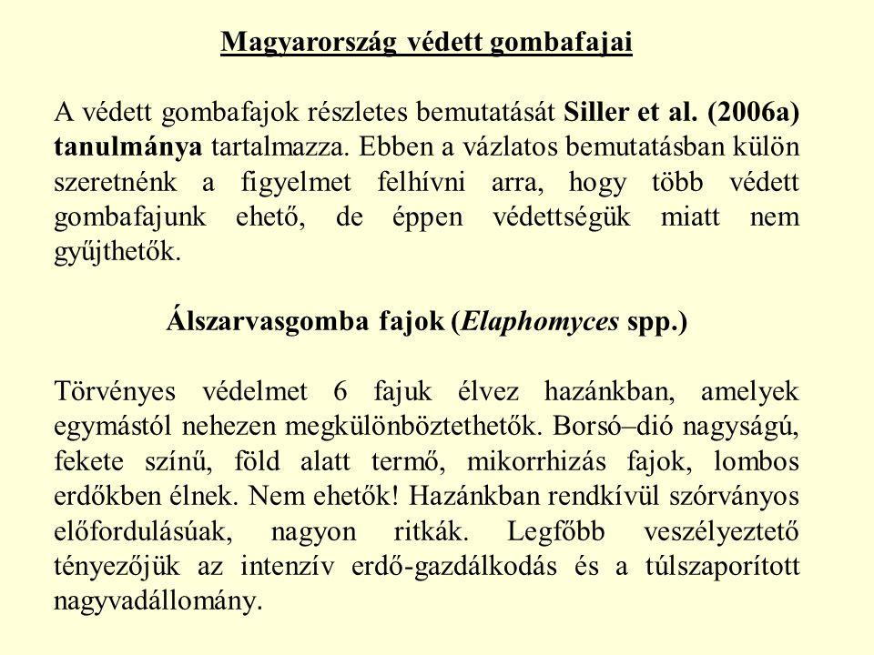 Magyarország védett gombafajai Álszarvasgomba fajok (Elaphomyces spp.)