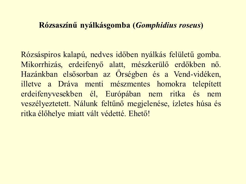 Rózsaszínű nyálkásgomba (Gomphidius roseus)