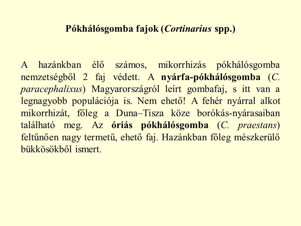 Pókhálósgomba fajok (Cortinarius spp.)