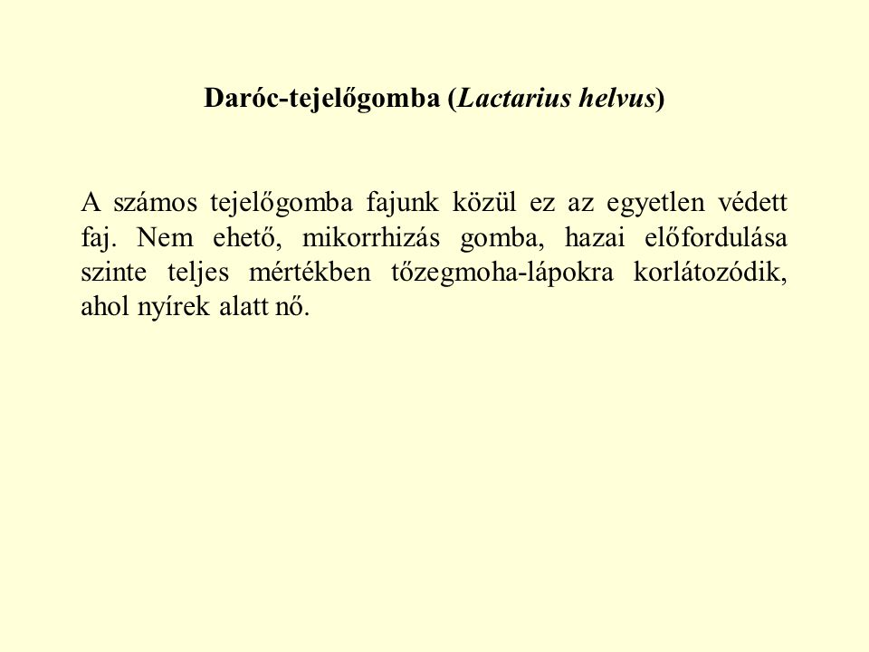 Daróc-tejelőgomba (Lactarius helvus)