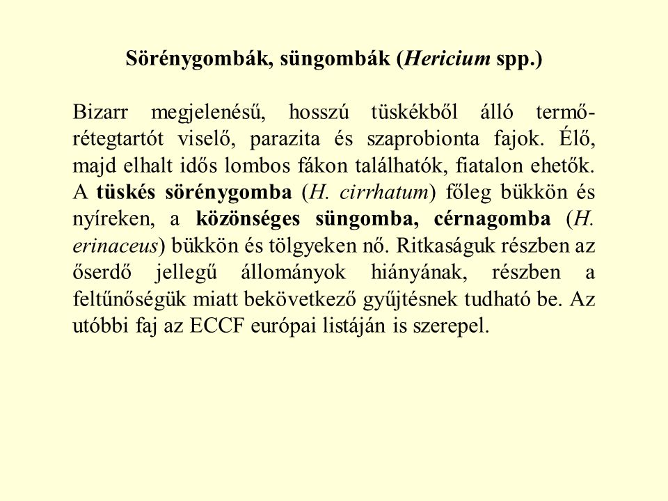 Sörénygombák, süngombák (Hericium spp.)