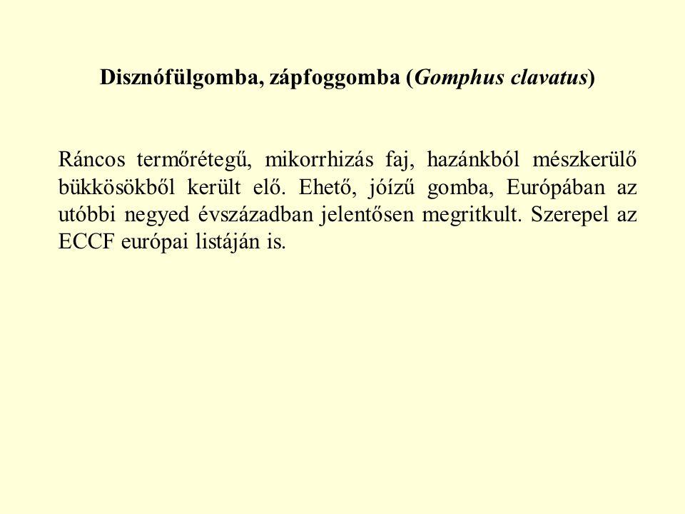 Disznófülgomba, zápfoggomba (Gomphus clavatus)