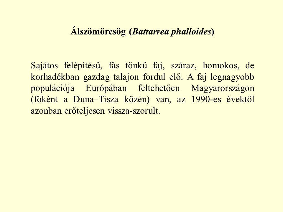 Álszömörcsög (Battarrea phalloides)