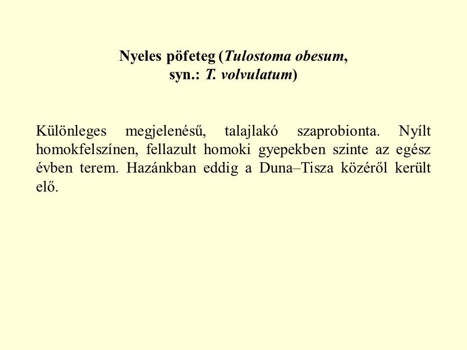 Nyeles pöfeteg (Tulostoma obesum,