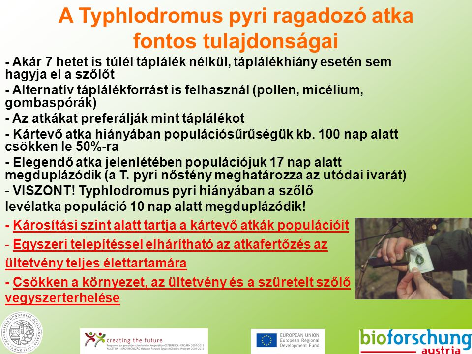 A Typhlodromus pyri ragadozó atka fontos tulajdonságai