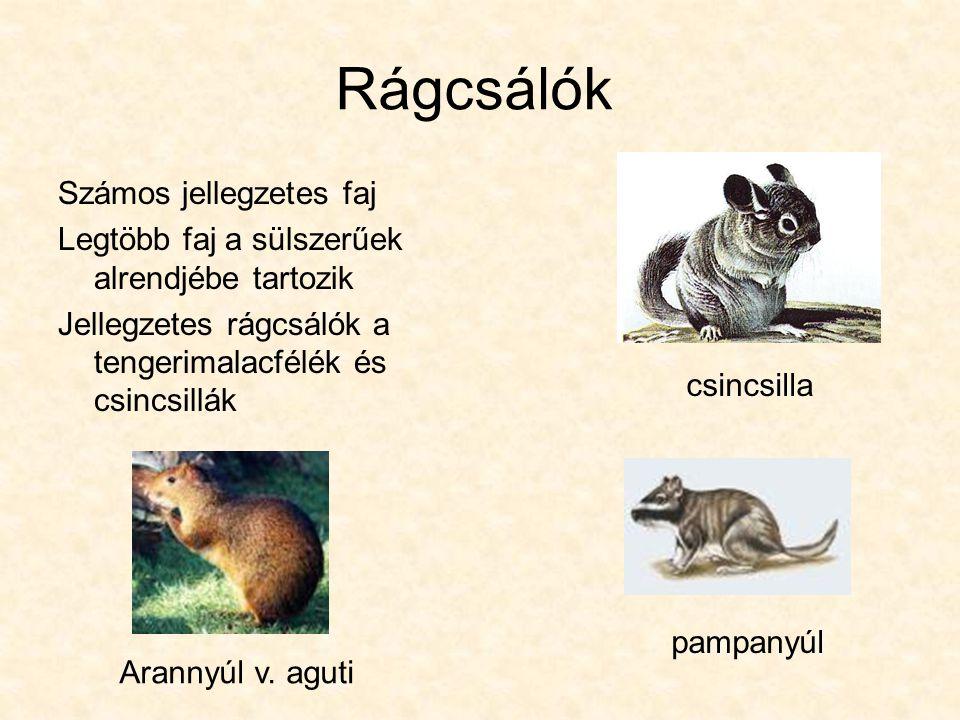Rágcsálók Számos jellegzetes faj