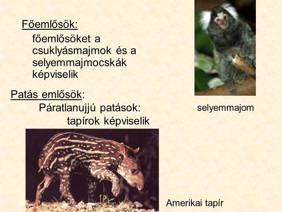főemlősöket a csuklyásmajmok és a selyemmajmocskák képviselik