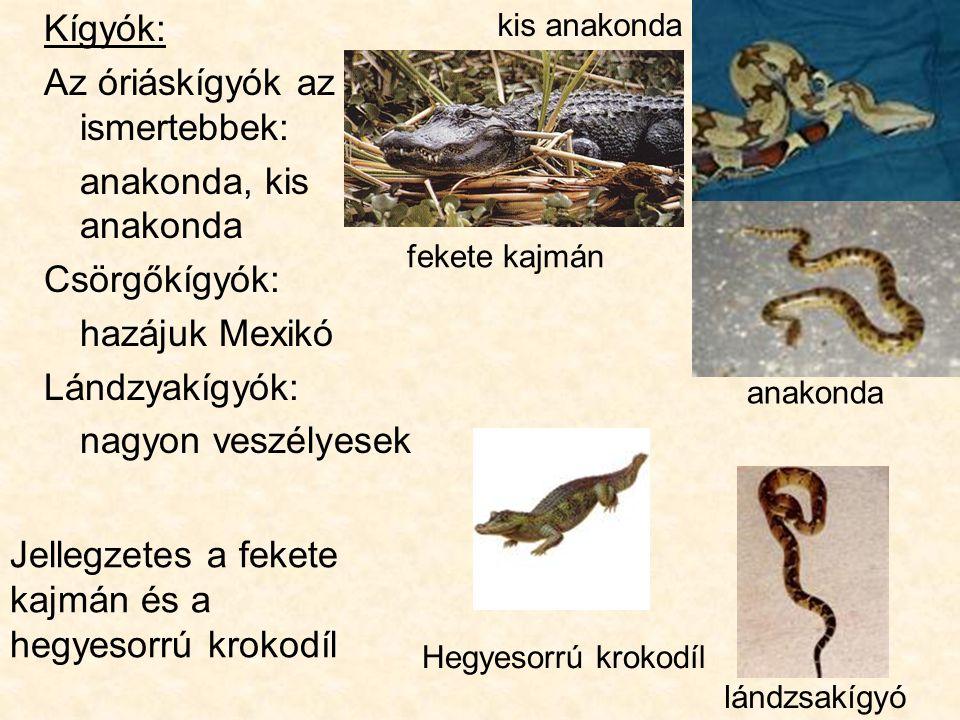 Az óriáskígyók az ismertebbek: anakonda, kis anakonda Csörgőkígyók: