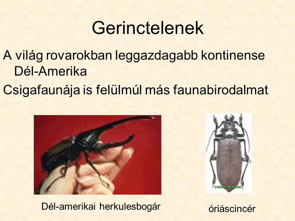 Gerinctelenek A világ rovarokban leggazdagabb kontinense Dél-Amerika