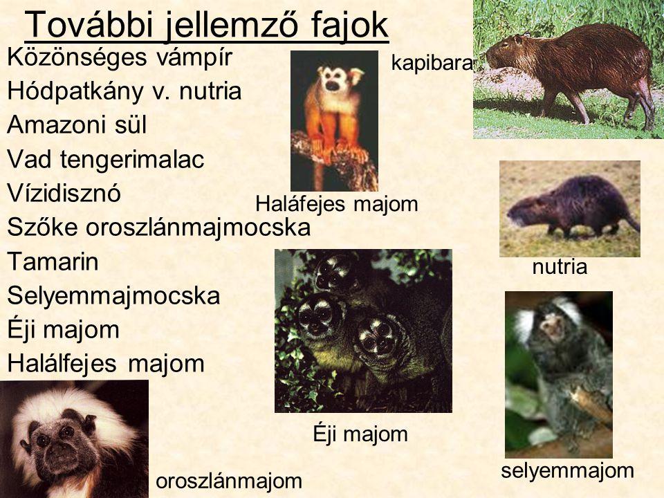 További jellemző fajok