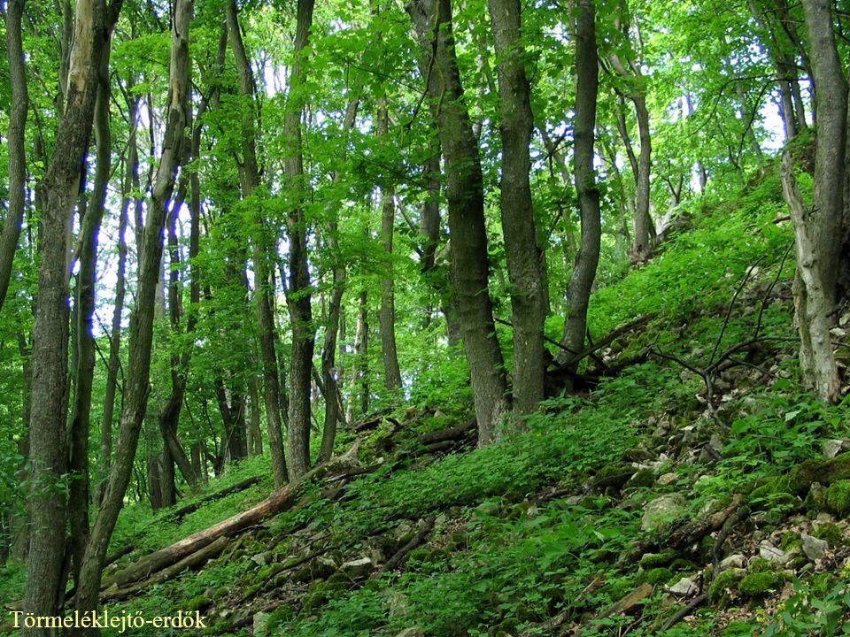 Törmeléklejtő-erdők