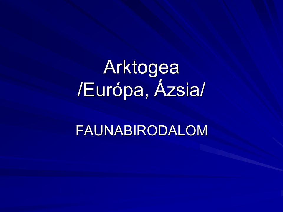Arktogea /Európa, Ázsia/