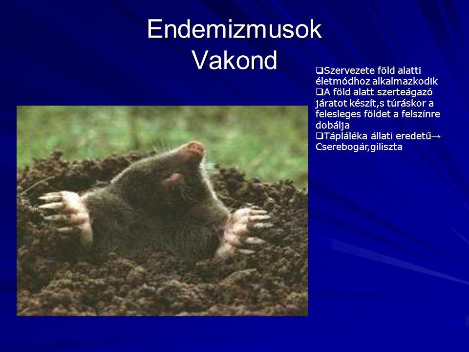 Endemizmusok Vakond Szervezete föld alatti életmódhoz alkalmazkodik