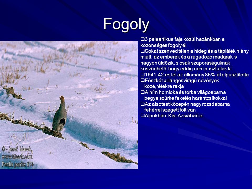 Fogoly 3 paleartikus faja közül hazánkban a közönséges fogoly él