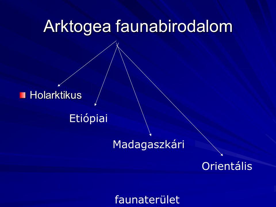 Arktogea faunabirodalom