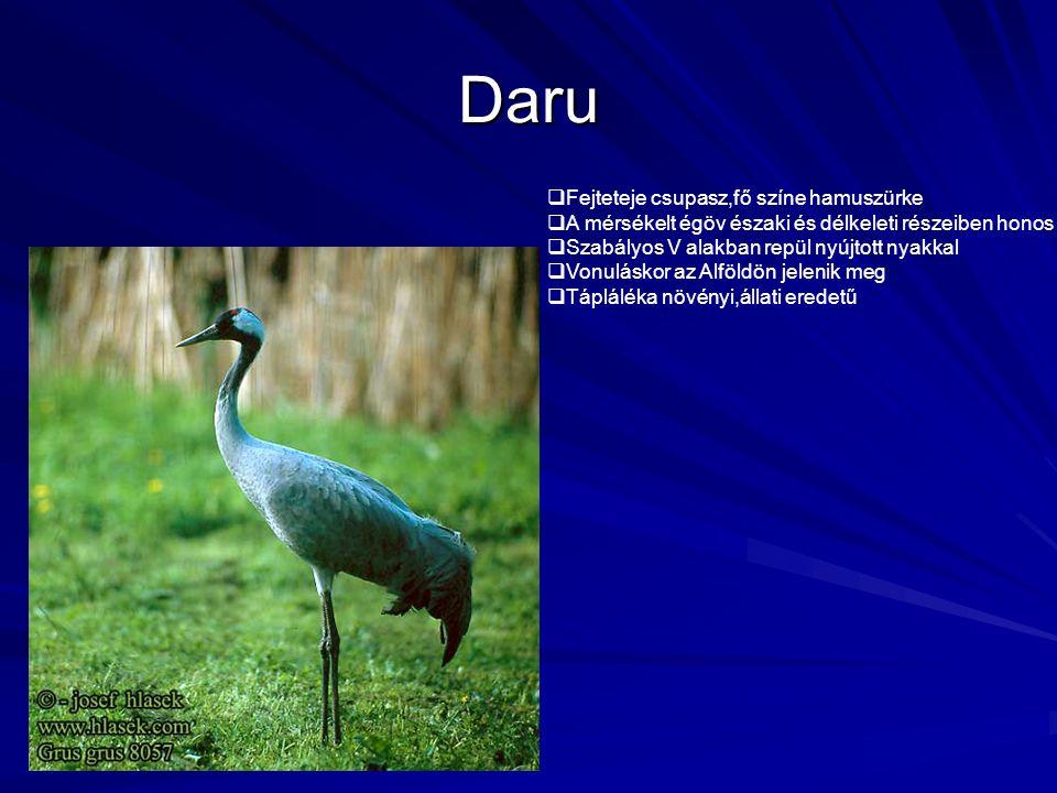 Daru Fejteteje csupasz,fő színe hamuszürke