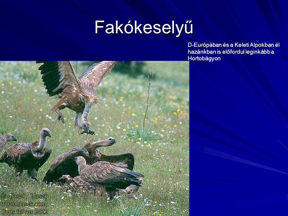 Fakókeselyű D-Európában és a Keleti Alpokban él