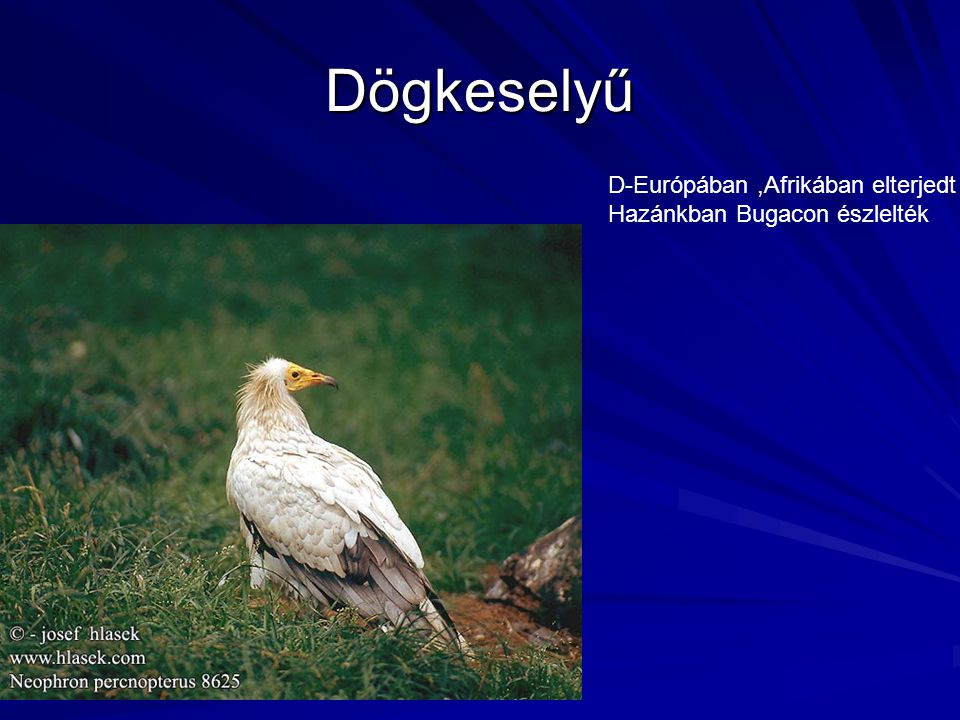Dögkeselyű D-Európában ,Afrikában elterjedt