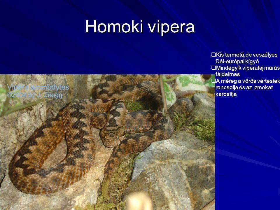 Homoki vipera Kis termetű,de veszélyes Dél-európai kígyó