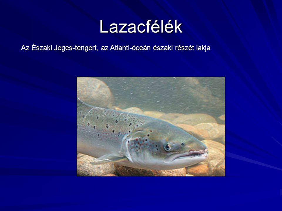 Lazacfélék Az Északi Jeges-tengert, az Atlanti-óceán északi részét lakja