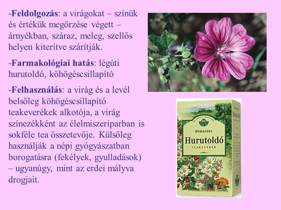 -Feldolgozás: a virágokat – színük és értékük megőrzése végett – árnyékban, száraz, meleg, szellős helyen kiterítve szárítják.