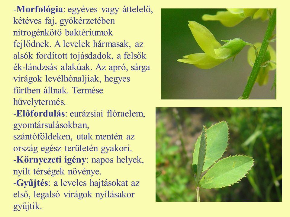 -Morfológia: egyéves vagy áttelelő, kétéves faj, gyökérzetében nitrogénkötő baktériumok fejlődnek. A levelek hármasak, az alsók fordított tojásdadok, a felsők ék-lándzsás alakúak. Az apró, sárga virágok levélhónaljiak, hegyes fürtben állnak. Termése hüvelytermés.