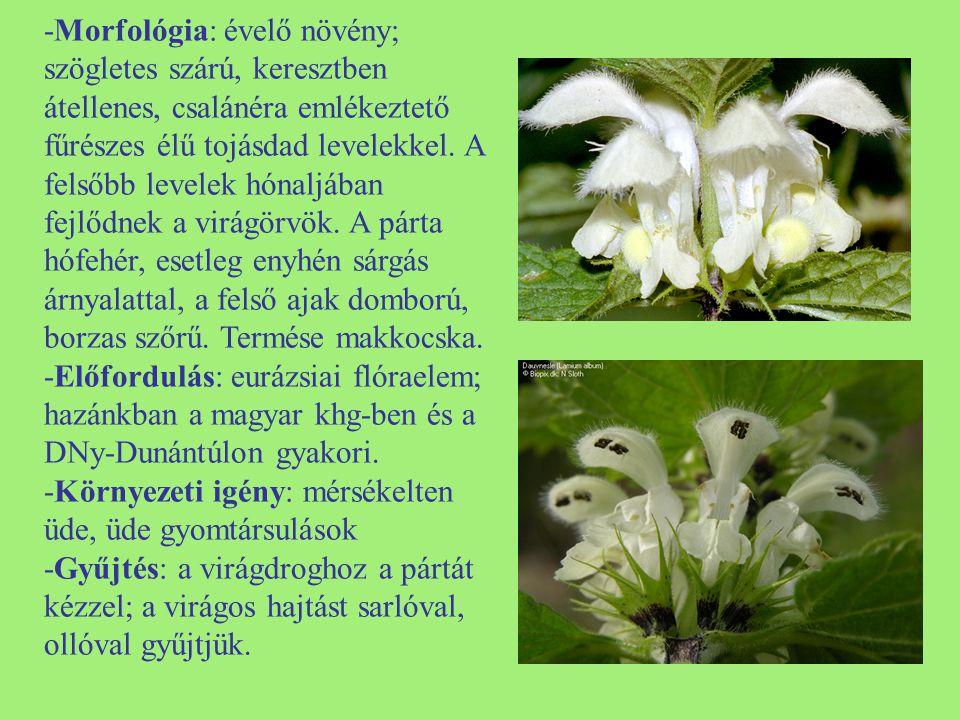 -Morfológia: évelő növény; szögletes szárú, keresztben átellenes, csalánéra emlékeztető fűrészes élű tojásdad levelekkel. A felsőbb levelek hónaljában fejlődnek a virágörvök. A párta hófehér, esetleg enyhén sárgás árnyalattal, a felső ajak domború, borzas szőrű. Termése makkocska.