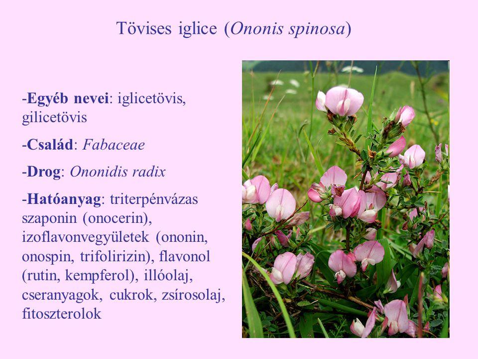 Tövises iglice (Ononis spinosa)