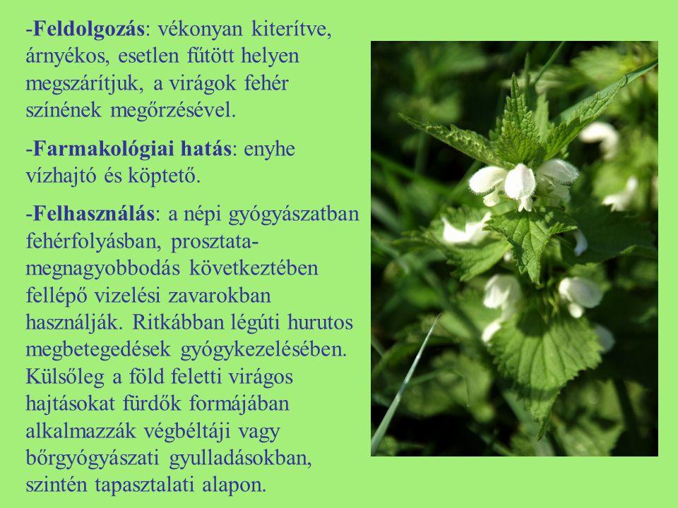 -Feldolgozás: vékonyan kiterítve, árnyékos, esetlen fűtött helyen megszárítjuk, a virágok fehér színének megőrzésével.