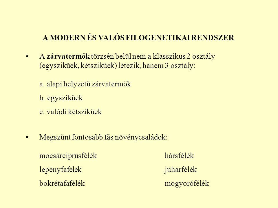 A MODERN ÉS VALÓS FILOGENETIKAI RENDSZER