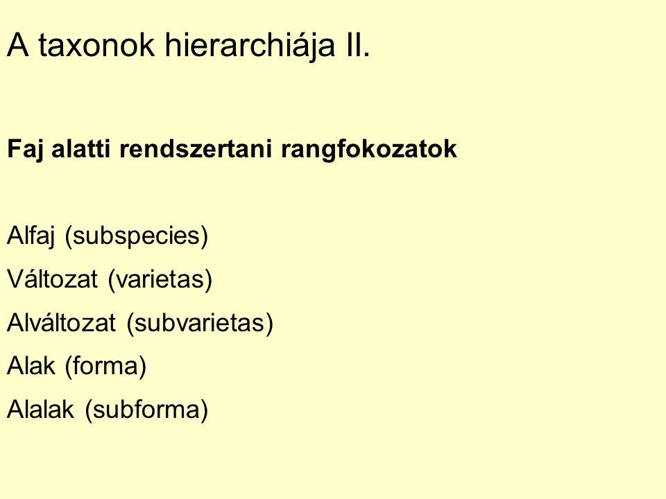 A taxonok hierarchiája II.