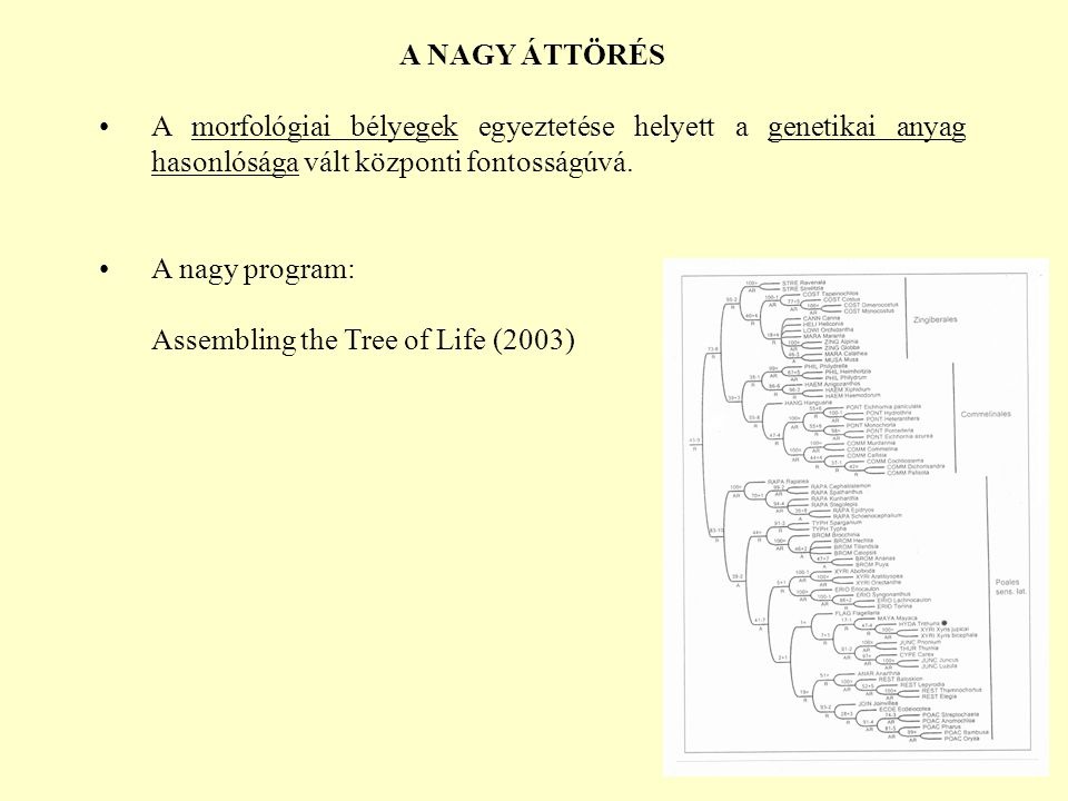 A NAGY ÁTTÖRÉS A morfológiai bélyegek egyeztetése helyett a genetikai anyag hasonlósága vált központi fontosságúvá.
