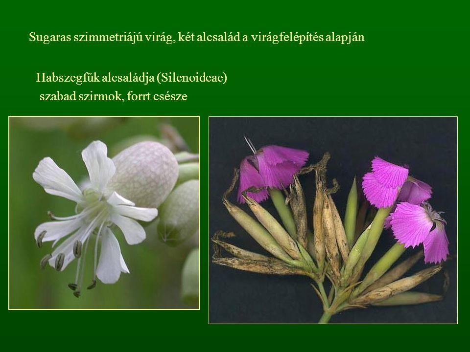 Sugaras szimmetriájú virág, két alcsalád a virágfelépítés alapján
