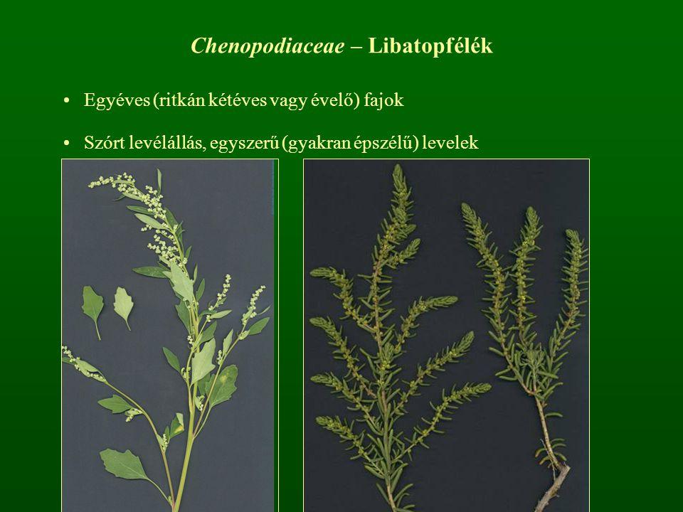 Chenopodiaceae – Libatopfélék