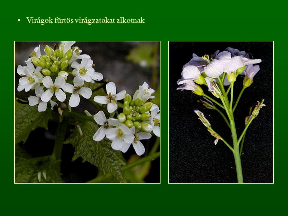 Virágok fürtös virágzatokat alkotnak