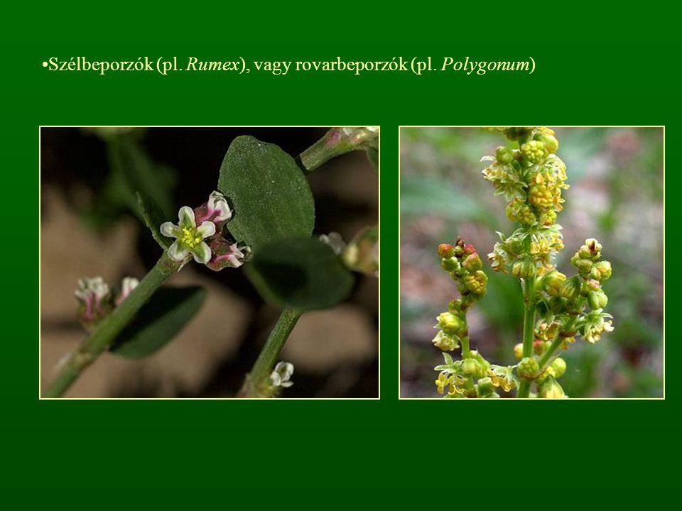 Szélbeporzók (pl. Rumex), vagy rovarbeporzók (pl. Polygonum)